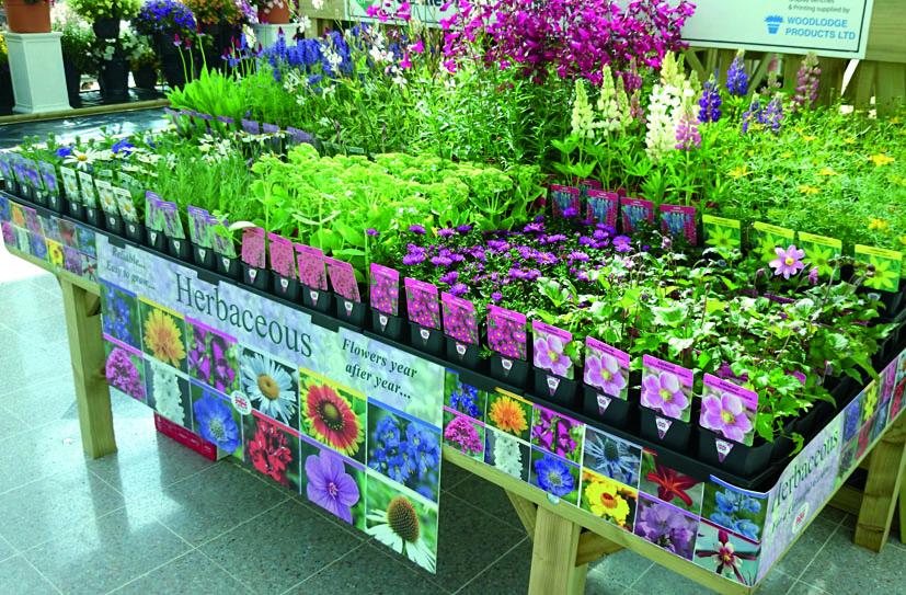 Herbaceous Display.JPG
